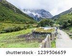 scene in daocheng yading... | Shutterstock . vector #1239506659