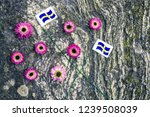 swedish flags and pink aster... | Shutterstock . vector #1239508039