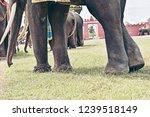 closeup of legs and wonderful... | Shutterstock . vector #1239518149