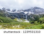 close views of the yangmaiyong... | Shutterstock . vector #1239531310
