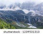 close views of the yangmaiyong... | Shutterstock . vector #1239531313