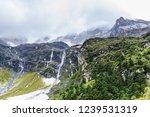 close views of the yangmaiyong... | Shutterstock . vector #1239531319