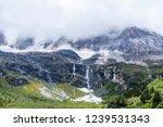 close views of the yangmaiyong... | Shutterstock . vector #1239531343