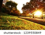 autumn park at sunset with...   Shutterstock . vector #1239550849