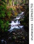 Quinault Waterfall Washington