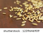 heap pile of paddy or unmilled... | Shutterstock . vector #1239646909