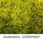 crispy dried seaweed with salt... | Shutterstock . vector #1239694609