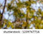 reclaimed background bokeh blur | Shutterstock . vector #1239767716