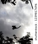 jump of ape   this kind of ape... | Shutterstock . vector #1239817696