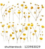 Pressed Yellow Wildflowers...