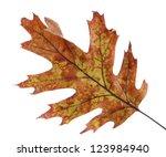 Bright Autumn Leaf  Isolated O...