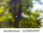 cobwebs on the background of... | Shutterstock . vector #1239853999