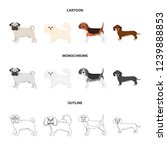 dog breeds cartoon outline... | Shutterstock . vector #1239888853