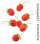 Falling Wild Strawberry...