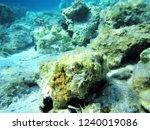 life under the sea | Shutterstock . vector #1240019086