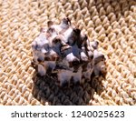seashell close up | Shutterstock . vector #1240025623