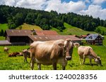 summer landscape with cow... | Shutterstock . vector #1240028356