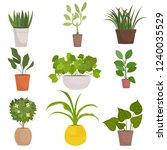 set of homemade green plants in ... | Shutterstock .eps vector #1240035529