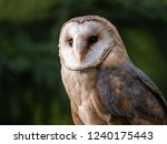 Stock photo barn owl tyto alba portrait forest in background barn owl portrait owl portrait owl closeup 1240175443
