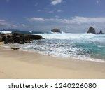 pointes des colibris  ... | Shutterstock . vector #1240226080