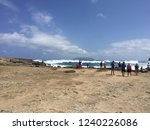 pointes des colibris  ... | Shutterstock . vector #1240226086