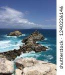 pointes des colibris  ... | Shutterstock . vector #1240226146