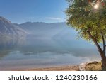 early misty morning on the...   Shutterstock . vector #1240230166