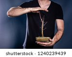 man holding japanese bonsai... | Shutterstock . vector #1240239439