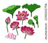 beautiful set of lotus flower... | Shutterstock .eps vector #1240242796
