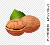 eco walnut icon. cartoon of eco ... | Shutterstock .eps vector #1240290106