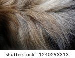 close up of fur cap   collar.... | Shutterstock . vector #1240293313