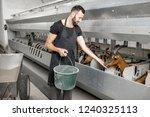 handsome man feeding goats... | Shutterstock . vector #1240325113