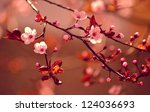 beautiful flowering japanese... | Shutterstock . vector #124036693