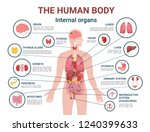 human body internal organs and... | Shutterstock .eps vector #1240399633