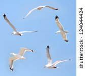 Seagulls Flying Among Blue Sky