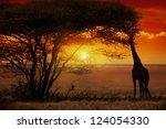 giraffe in sunset in africa | Shutterstock . vector #124054330