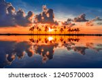 palm trees with reflections at... | Shutterstock . vector #1240570003