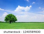 Landscape  Lonely Tree On Gree...