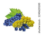 fresh  nutritious  tasty grapes.... | Shutterstock .eps vector #1240620100