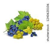 fresh  nutritious  tasty grapes.... | Shutterstock .eps vector #1240620106