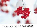 Winter Frozen Viburnum Under...