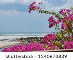 Pink Bougainvillea Flowers On...