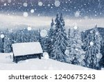 charming white spruces on a... | Shutterstock . vector #1240675243