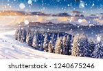 charming white spruces on a... | Shutterstock . vector #1240675246