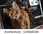 young red kitten against open... | Shutterstock . vector #124068100