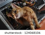 Stock photo young red kitten against open computer inside 124068106