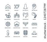 human neck  ribs  skull with... | Shutterstock .eps vector #1240728799