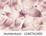 bright brown abstract... | Shutterstock . vector #1240761400
