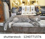 Cat Is Sleeping  On A Jewelry...