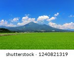 "beautiful spring scenery ""rice... 